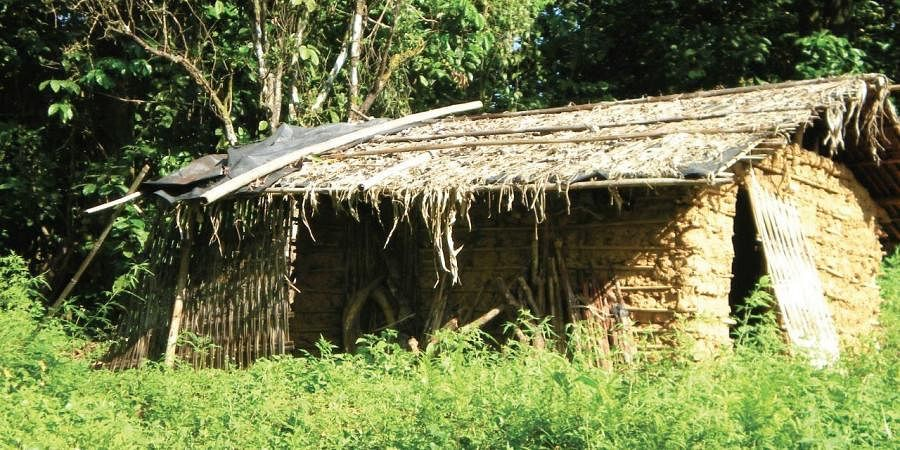 Habitual seclusion allows them to follow social distancing automatically since their hamlets are spread far and wide in the Idamalayar Reserve Forest.