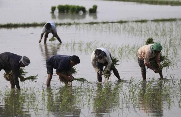 As migrants stay back, Punjab faces nolabour crunch for paddy sowing this year