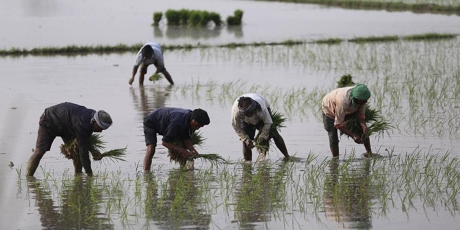 farmers, farming, agriculture