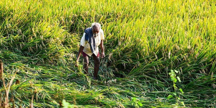Agriculture,  Tamil Nadu farmers