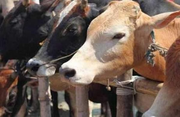Tripura BJP MLA demands enact of laws for population control andcow protection