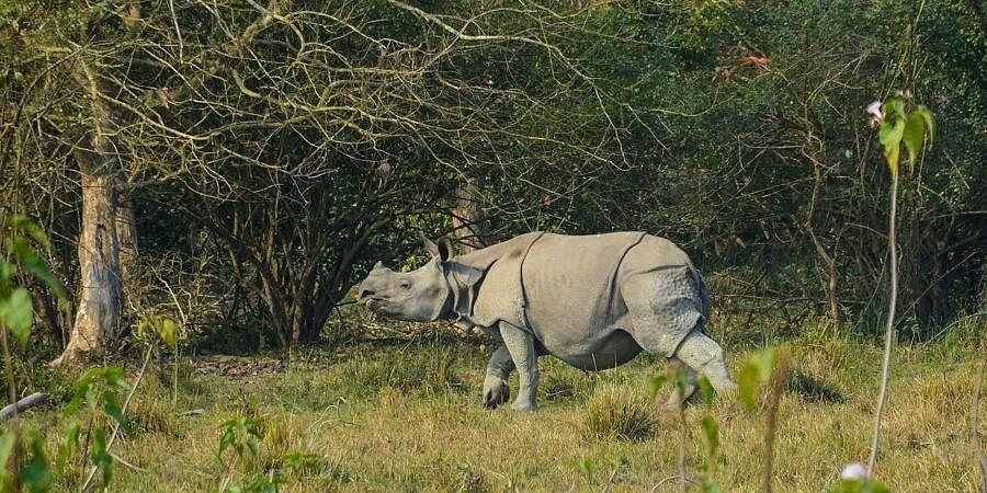 A one-horned rhinoceros inside the Kaziranga National Park in Nagaon district of Assam.