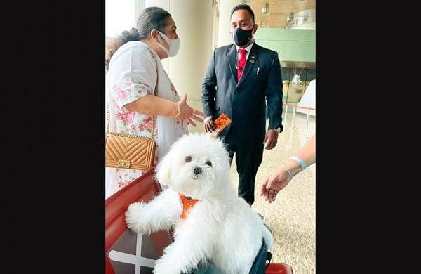 Lucky dog: Air India passenger books entire business class cabin to fly her pet to Chennai