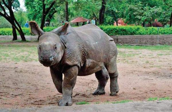Assam consigns rhino horn hoard to flames to highlight they have no medicinal value