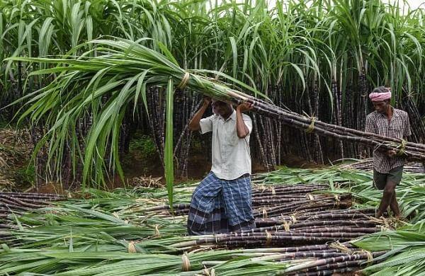Uttar Pradesh governmentincreases State Advisory Priceon sugarcane